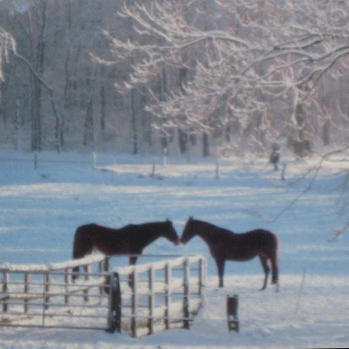 pferde_im_schnee